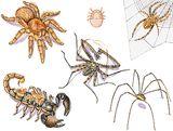Imprimer le dessin en couleurs : Arachnides, numéro 280028