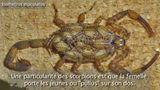 Imprimer le dessin en couleurs : Arachnides, numéro 32f54728