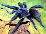 Imprimer le dessin en couleurs : Arachnides, numéro 337206