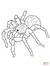 Imprimer le coloriage : Arachnides, numéro 48d6a870