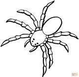 Imprimer le coloriage : Arachnides, numéro 538f16d0