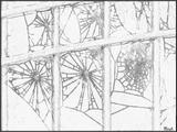 Imprimer le coloriage : Arachnides, numéro 56142