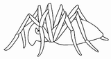 Imprimer le coloriage : Arachnides, numéro 56143
