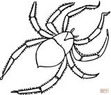 Imprimer le coloriage : Arachnides, numéro 735b5683