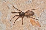 Imprimer le dessin en couleurs : Arachnides, numéro 95a9b01f