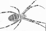 Imprimer le coloriage : Araignée, numéro 55888