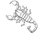 Imprimer le coloriage : Scorpion, numéro 24606
