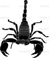 Imprimer le coloriage : Scorpion, numéro 26233
