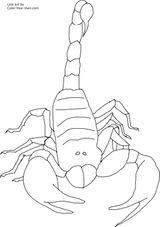 Imprimer le coloriage : Scorpion, numéro 54174fb7