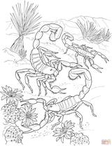 Imprimer le coloriage : Scorpion, numéro cc94980b