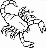 Imprimer le coloriage : Scorpion, numéro d8c46553