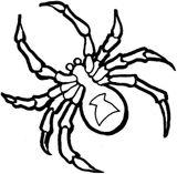 Imprimer le coloriage : Arachnides, numéro c6be5283