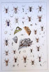 Imprimer le dessin en couleurs : Arachnides, numéro e0b5d897