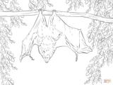 Imprimer le coloriage : Arachnides, numéro f996c4a2