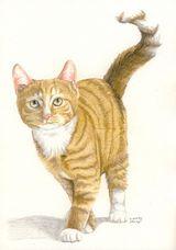 Imprimer le dessin en couleurs : Chat, numéro 232742