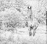 Imprimer le coloriage : Cheval, numéro 220896