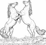 Imprimer le coloriage : Cheval, numéro 3723