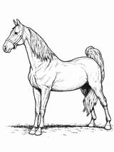 Imprimer le coloriage : Cheval, numéro 7633