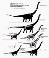 Imprimer le coloriage : Diplodocus, numéro 290bf1be