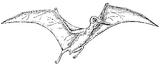 Imprimer le coloriage : Pterodactyle, numéro 220318