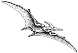 Imprimer le coloriage : Pterodactyle, numéro 297630
