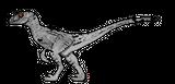 Imprimer le coloriage : Vélociraptor, numéro 226696