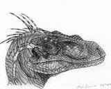 Imprimer le coloriage : Vélociraptor, numéro 687250