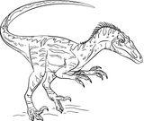 Imprimer le coloriage : Vélociraptor, numéro c7c937e4