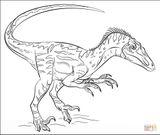 Imprimer le coloriage : Vélociraptor, numéro d40fa668