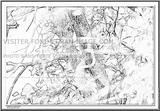 Imprimer le coloriage : Ecureuil numéro 277131
