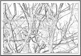 Imprimer le coloriage : Ecureuil, numéro 279569