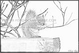 Imprimer le coloriage : Ecureuil numéro 295916