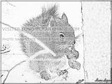 Imprimer le coloriage : Ecureuil numéro 304302