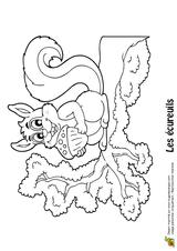 Imprimer le coloriage : Ecureuil, numéro 349807