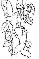 Imprimer le coloriage : Ecureuil, numéro 671485