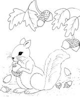 Imprimer le coloriage : Ecureuil, numéro 99c12b18