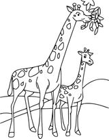 Imprimer le coloriage : Girafe, numéro 102b191
