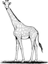 Imprimer le coloriage : Girafe, numéro 2f311e3d