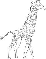 Imprimer le coloriage : Girafe, numéro 30f85a5b