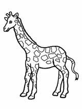 Imprimer le coloriage : Girafe, numéro 352b1887