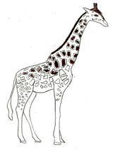 Imprimer le coloriage : Girafe, numéro 3d86302a