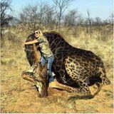 Imprimer le dessin en couleurs : Girafe, numéro 3fd91030