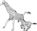 Imprimer le coloriage : Girafe, numéro 4160e5a1