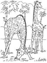 Imprimer le coloriage : Girafe, numéro 7701aa75