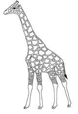 Imprimer le coloriage : Girafe, numéro 7fd0cfd0