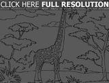 Imprimer le coloriage : Girafe, numéro 914d316a