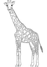 Imprimer le coloriage : Girafe, numéro adda2486