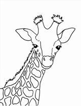 Imprimer le coloriage : Girafe, numéro cf67fbe8