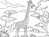 Imprimer le coloriage : Girafe, numéro e8308d69
