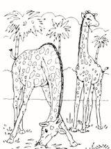 Imprimer le coloriage : Girafe, numéro ead236b